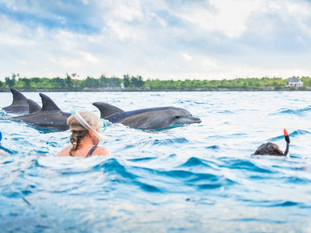 Dolphin-and-Whale-watching-Activities-in-Zanzibar