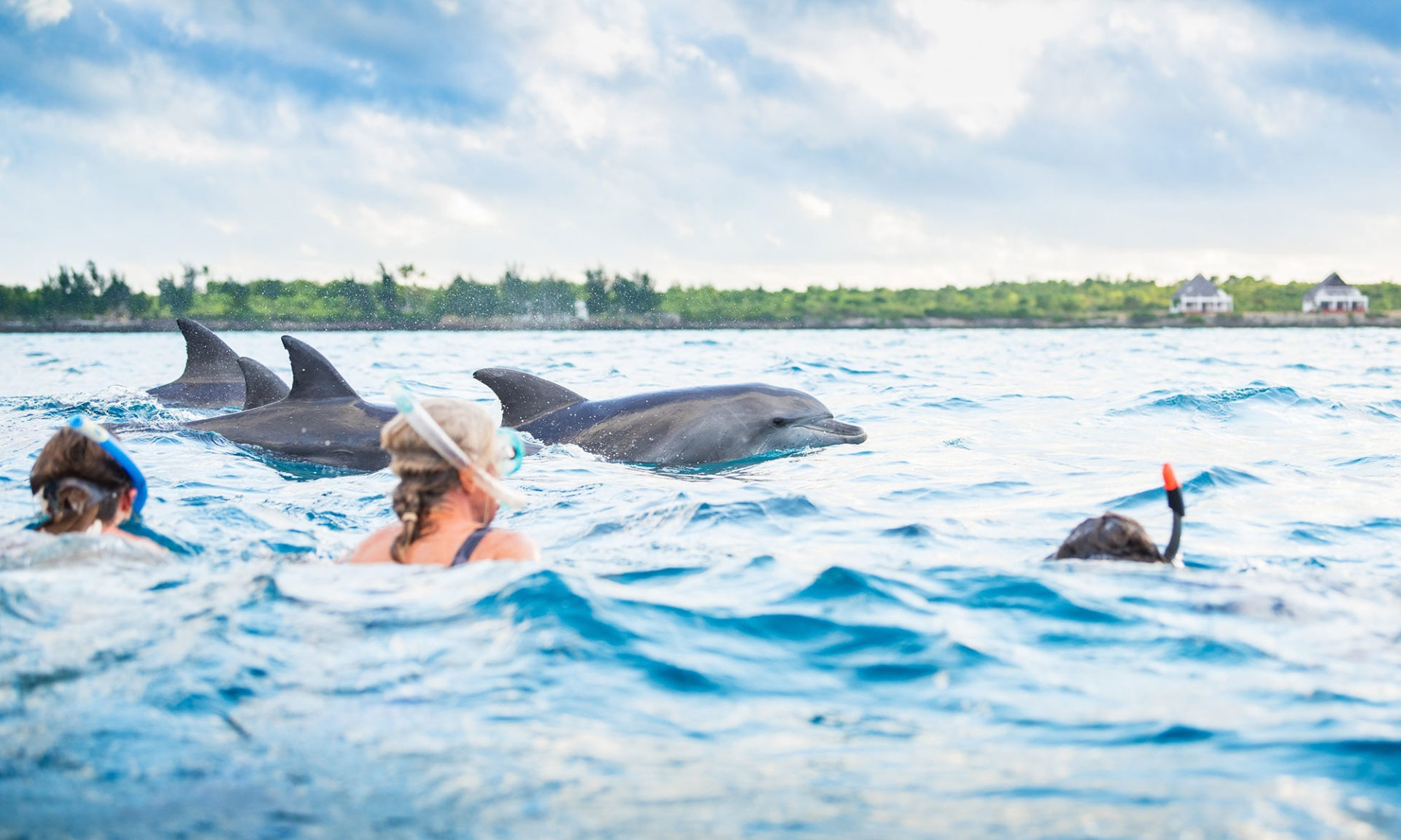 Dolphin-and-Whale-watching-Activities-in-Zanzibar