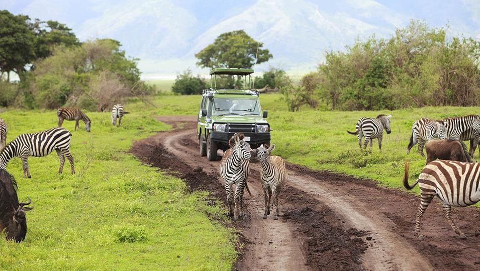 Discover Memorable Adventures with Luxury Safari and Tours in Tanzania