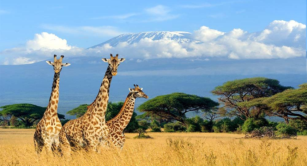 Discover the Best of Tanzania