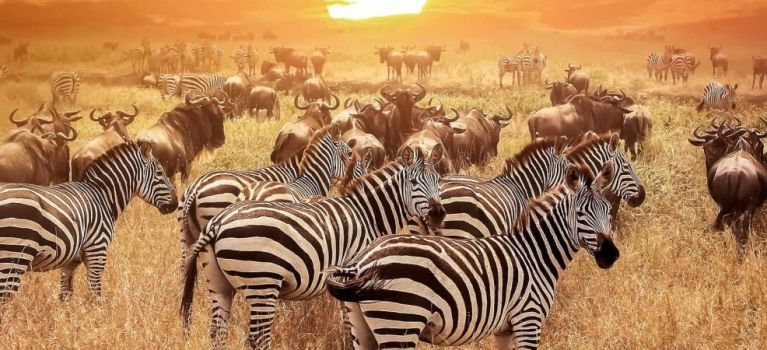 Serengeti National Park -11