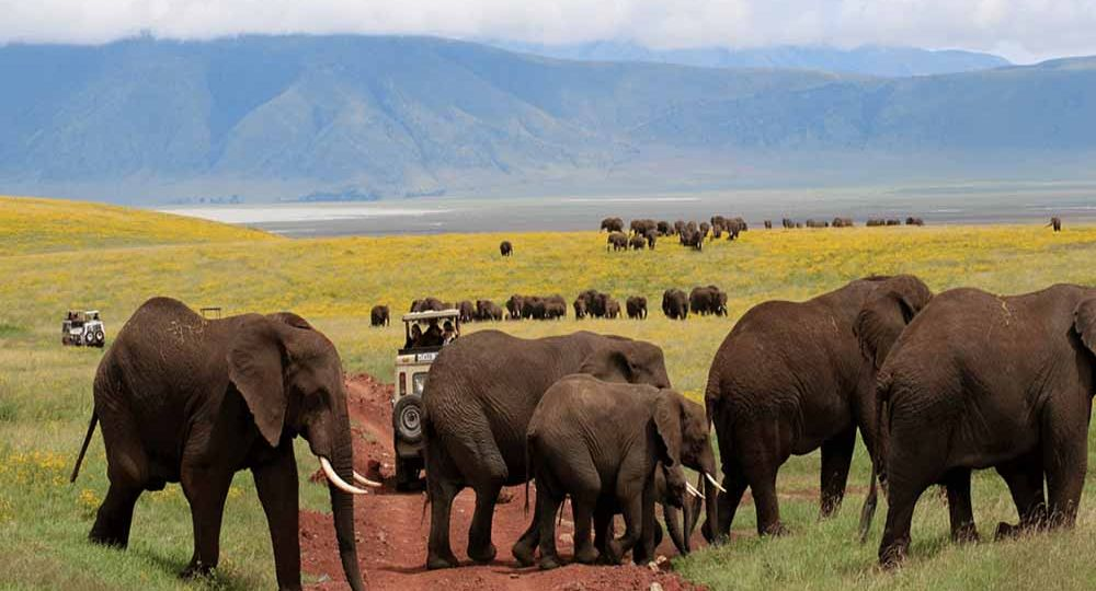 Top 5 Travel Tips to Tanzania