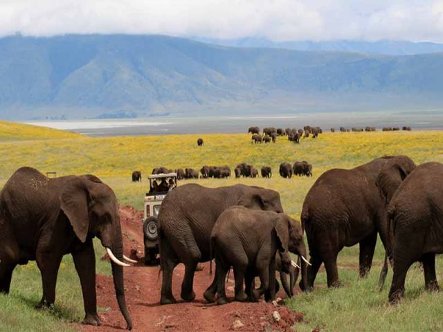 Top 5 Travel Tips to Tanzania