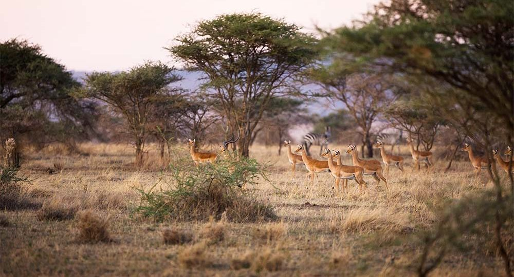 Why You Should Visit Serengeti National Park