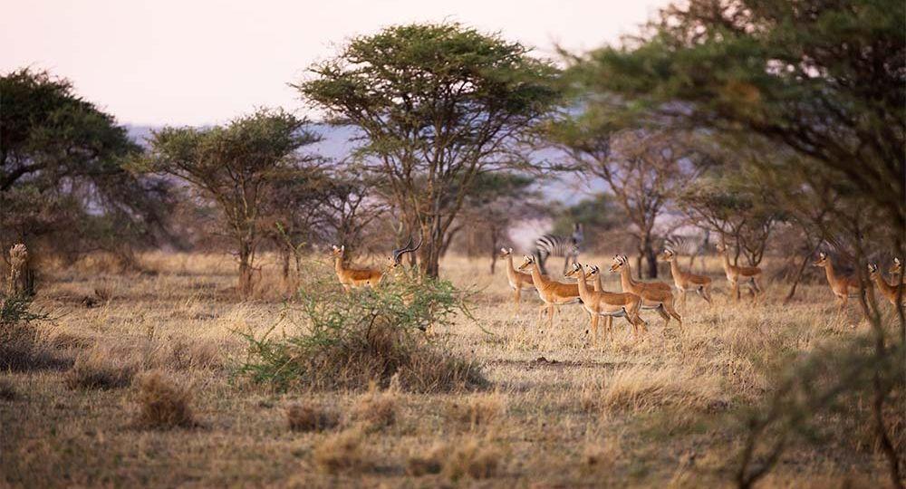 Why You Should Visit Serengeti National Park