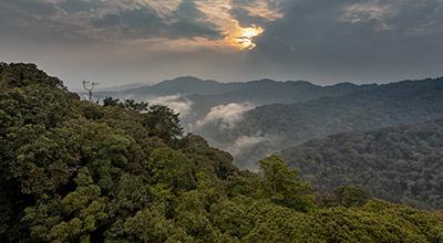 Rwanda-Chimpanzee-Trekking-safari