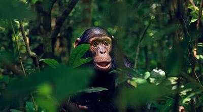 Uganda-Primates-Safaris