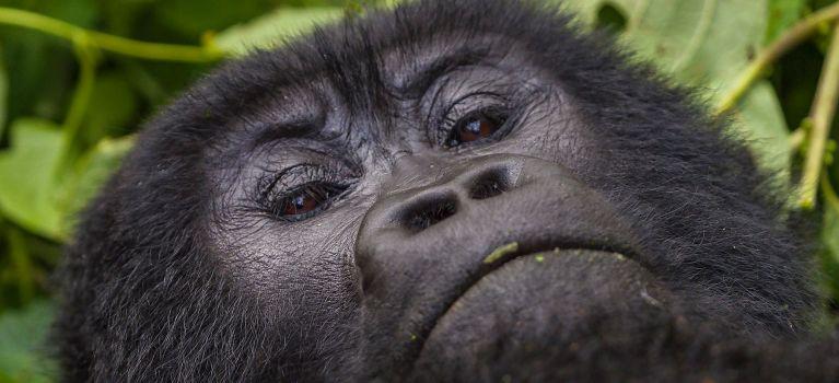 Best of rwanda Safaris