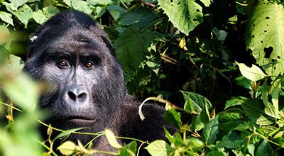Classic-Safaris-Uganda