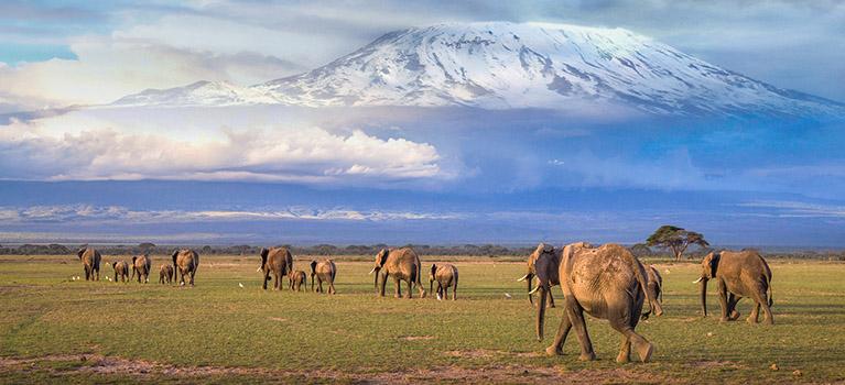 Climbing Kilimanjaro Longai Route