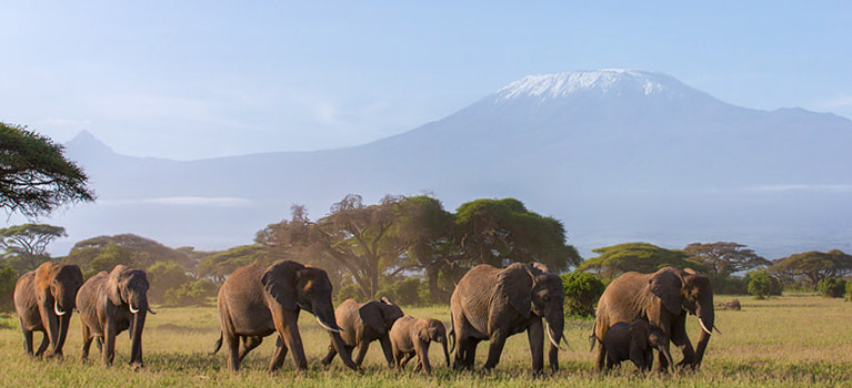 Climbing Kilimanjaro Machame Route