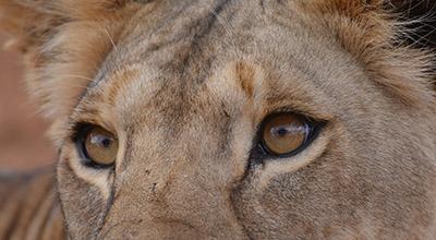 Kenya big five Safaris