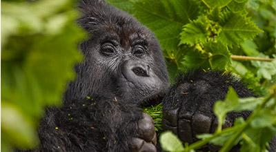 Magical of Rwanda Safaris and tours