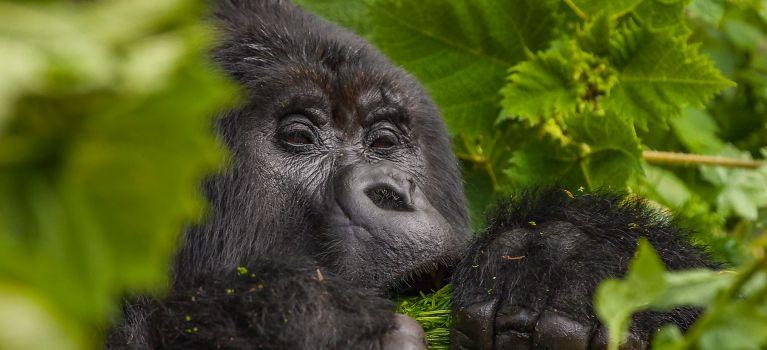 Magical of Rwanda Safaris and trips
