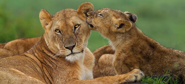 Masai-Mara-Trips-and-safaris