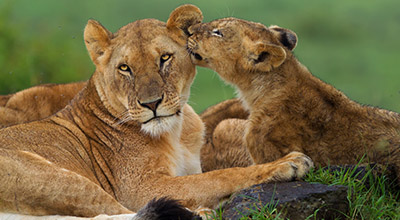 Masai-Mara-Trips