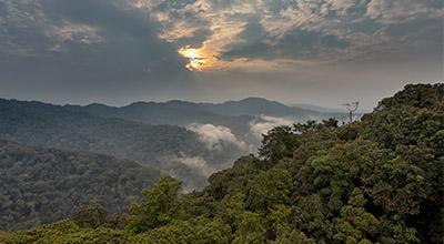 Nyungwe-Forest-Rwanda-Safaris