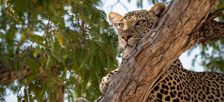 Ruaha-safaris-Tanzania