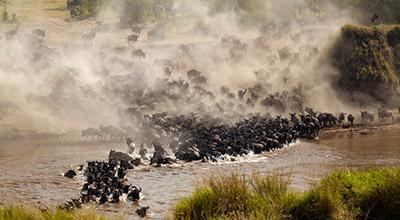 Serengeti-Great-Migration
