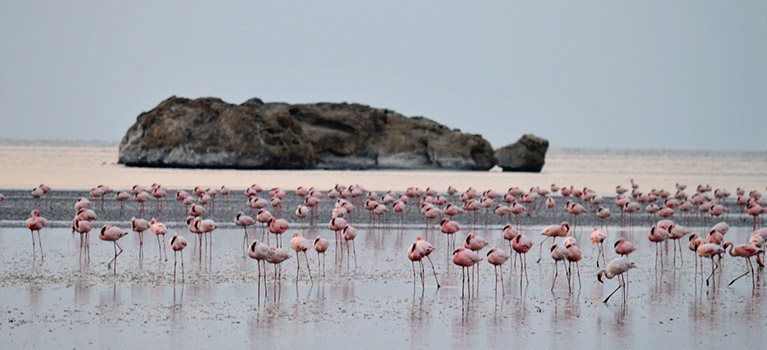 Tanzania-Birding-Safari