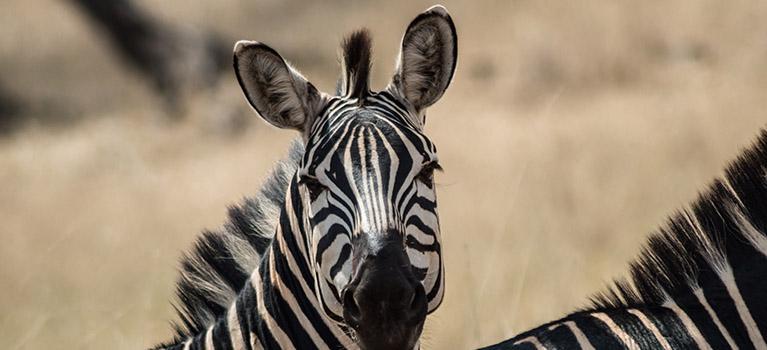 Tarangire Day Trip Safari