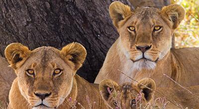 Wonderful Serengeti