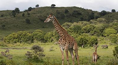 Arusha-National-Park-safaris