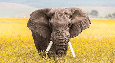 Ngorongoro-Crater-Safaris