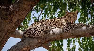 Ruaha-National-Park-Safaris