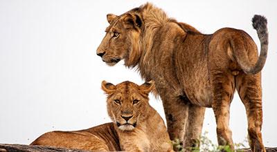 Kidepo-Valley-Safaris