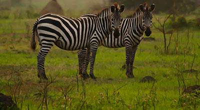 Lake-Mburo-Safaris-Uganda