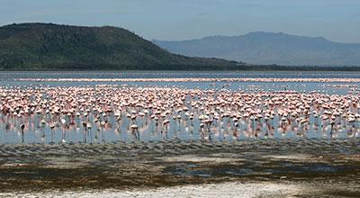 Lake-Nakuru-Park-Kenya