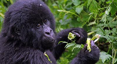 Mgahinga-Park-Safaris-Uganda