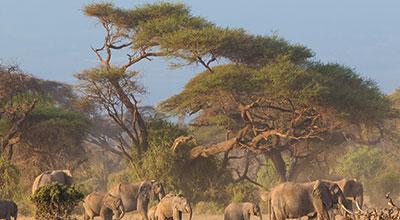 Mount-Kenya-safaris