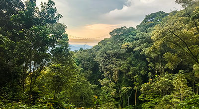 Nyungwe-Forest-National-Park-Safaris