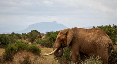Tsavo-East-National-Park-Kenya